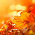 fall-sale